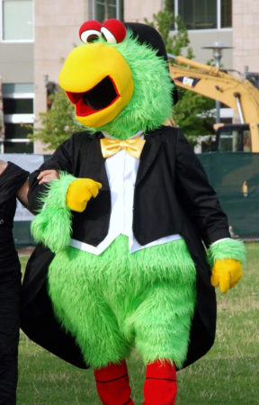 pirates parrot mascot pittsburgh wedding ideas